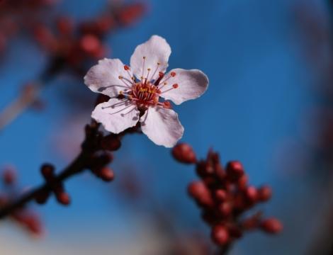 Blossom with Blue