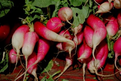 radishes-greenmarket-unionsquare-snapmammas