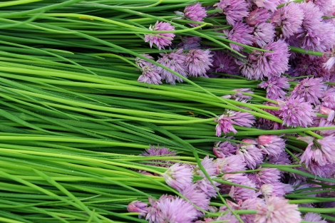 flowering-chives-greenmarket-unionsquare-snapmammas