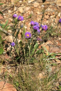IMG_9066-DemotteCampsite-PurpleWildflowers-SMALL