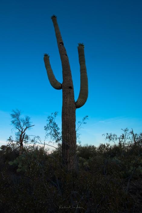 SaguaroSunrise-5755 signatureFLCIKR