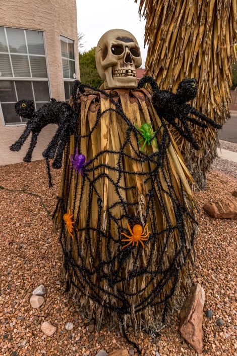 Spooky Southwestern: A Yucca is incorporated
