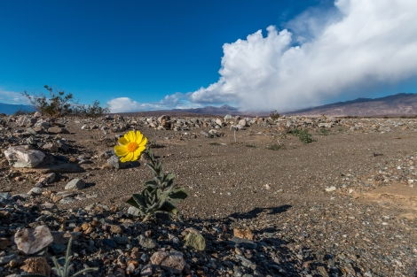 DeathValley-RoadToMesquiteDunesFlower-5767-small