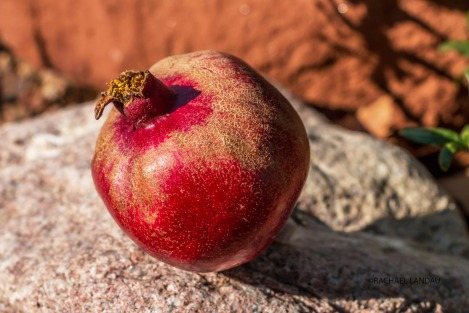 Pomegrante5778